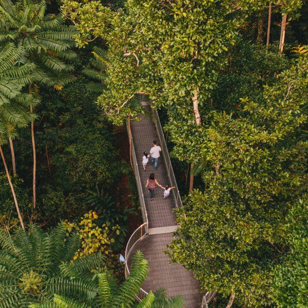 Mamu Tropical Skywalk Queensland