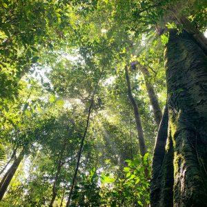 Cairns Rainforest Tour