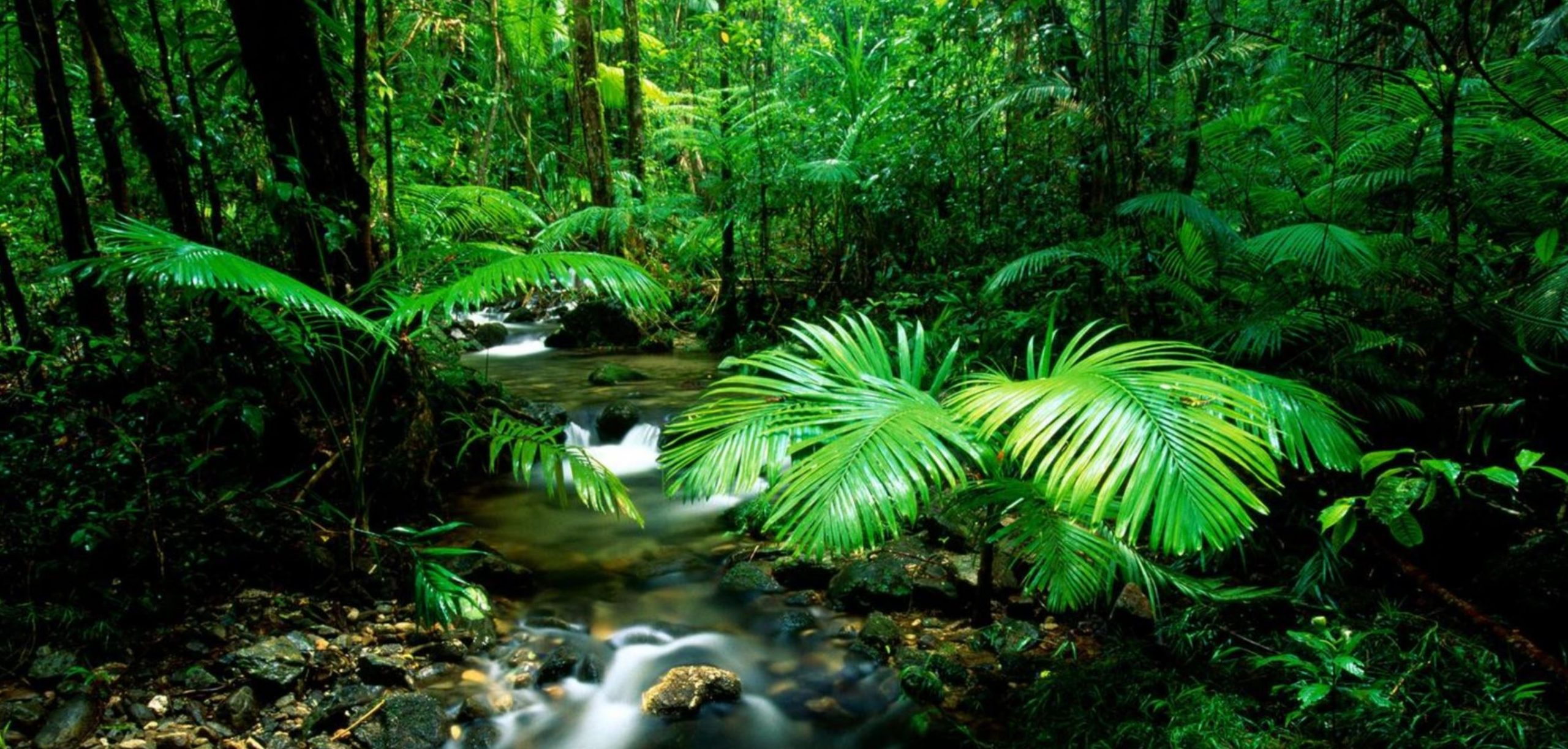 Cairns Day Tours