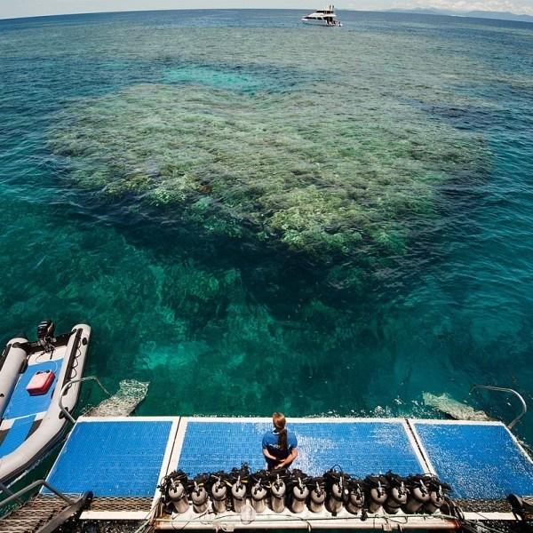 Cairns Tour Package Daintree, Reef and Kuranda