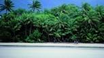 Daintree Rainforest Luxury Tour