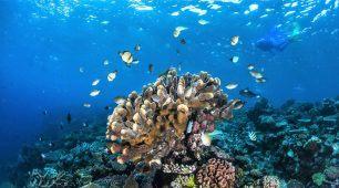 reef liveaboard and Kuranda