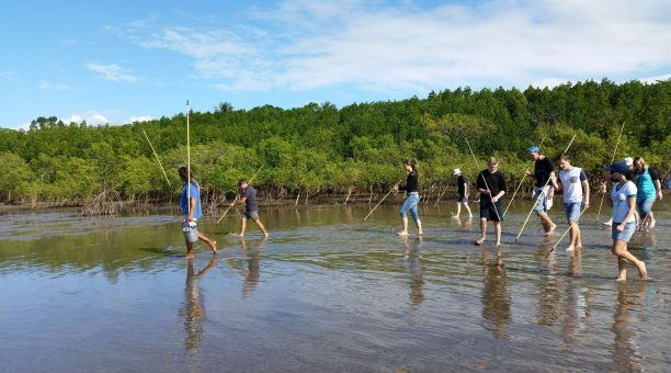 Mangrove Walk at Cooya Beach