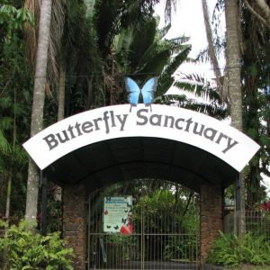 Australian Butterfly Sanctuary