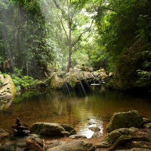 Daintree Rainforest on a Budget