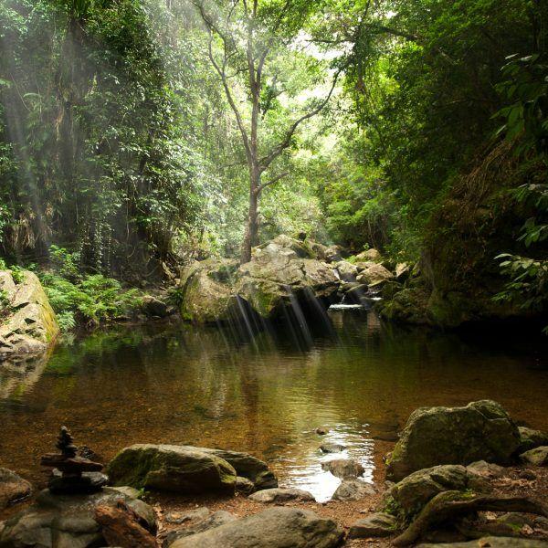 Daintree Rainforest on a Budget