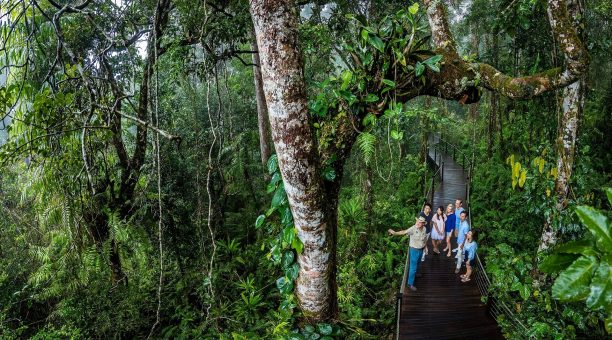 Ancient rainforest on the Skyrail